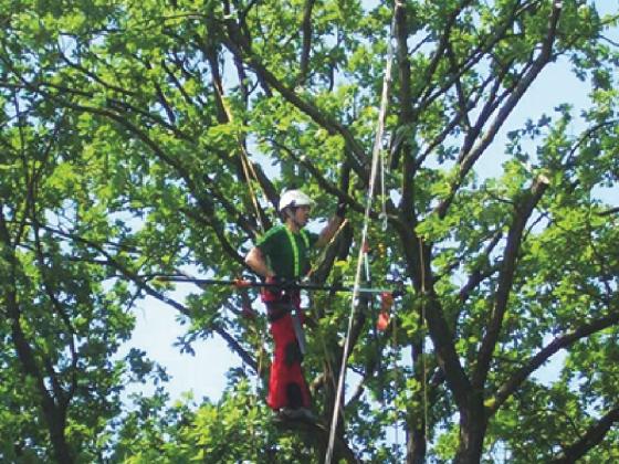Baumpfleger gewsucht. Baumdienst Herkenrath Bonn und Hennef