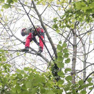 Ausbildung beim Baumdienst in Bonn, Hennef und Siegburg