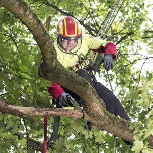 Baumpflege durch den Baumdienst Herkenrath in Bonn. Baum fällen, Pflegen, Planzen.