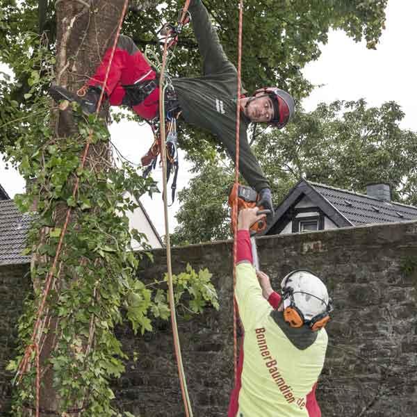 Baumpflegearbeiten an einem Baum mit einer Motorsäge