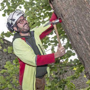 Fritz Herkenrath bei einer Baumkontrolle.