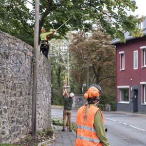 Baumsicherung und Baumpflege für Kommunen und private Baumbesitzer