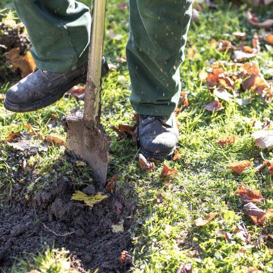 Neupflanzung oder Ersatzpflanzung eines Baumes. Aushub für den Wurzelballen.