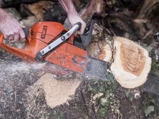 Baumfällung durch den Bonner und Hennefer Baumdienst