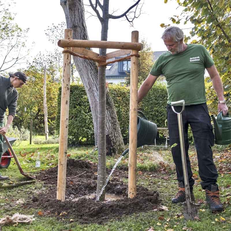 Baumpflanzung vom Baumdienst Herkenrath