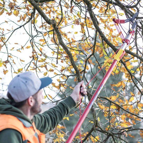 Rückschnitt von Sträuchern und Bäumen im Herbst
