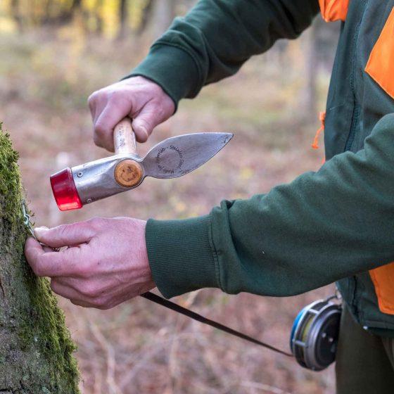 Die Rückschnittbestimmung für ein gesundes Baumwachstum.