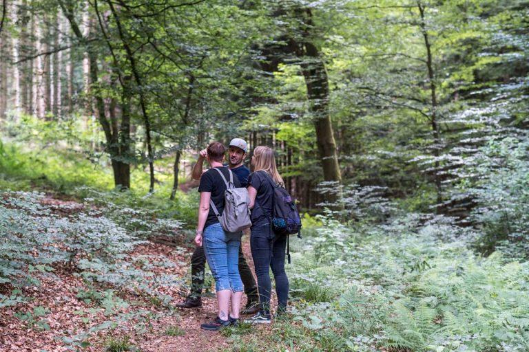 Waldbaden mit dem Baumdienst Herkenrath