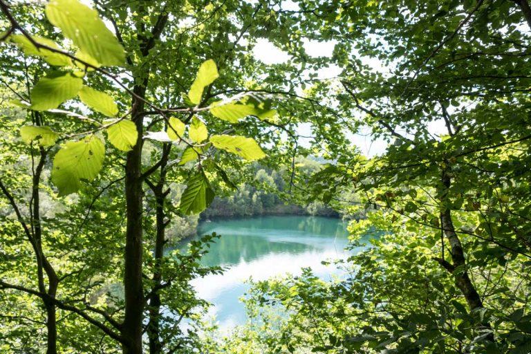 Waldbaden eröffnet die Wunder und die Heilkraft der Bäume und Wälder
