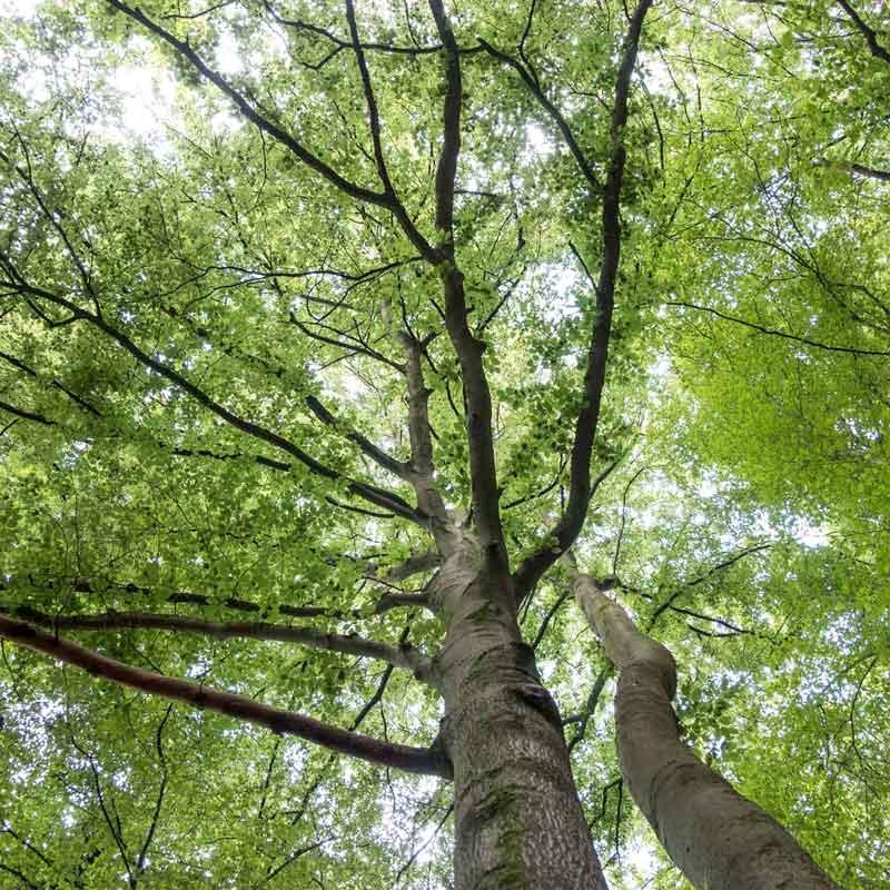 Baumdienst und Naturschutz sind für die Firma Herkenrath die Basis für eine gute Arbeit an Baum und Strauch.